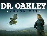 dr_oakley_yukon_vet.jpg