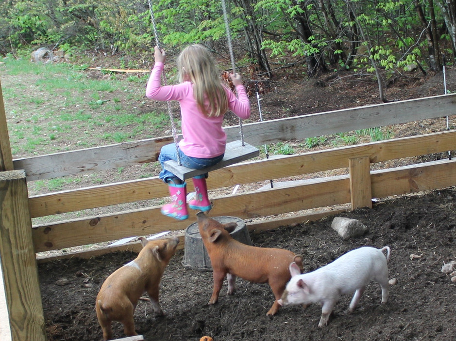 Singing to the pigs