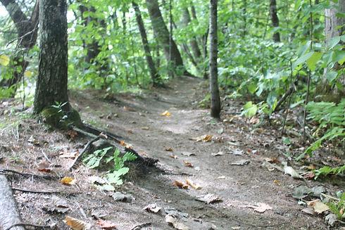 wooded path.JPG