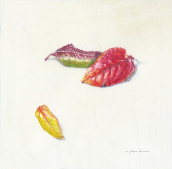 Three autumn Blueberry leaves - © Gaynor Dickeson - UK