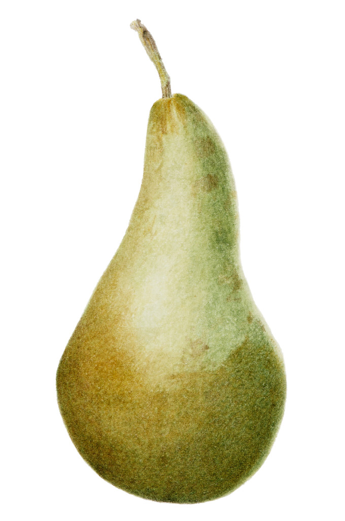 Green pear © Sheelagh Keane