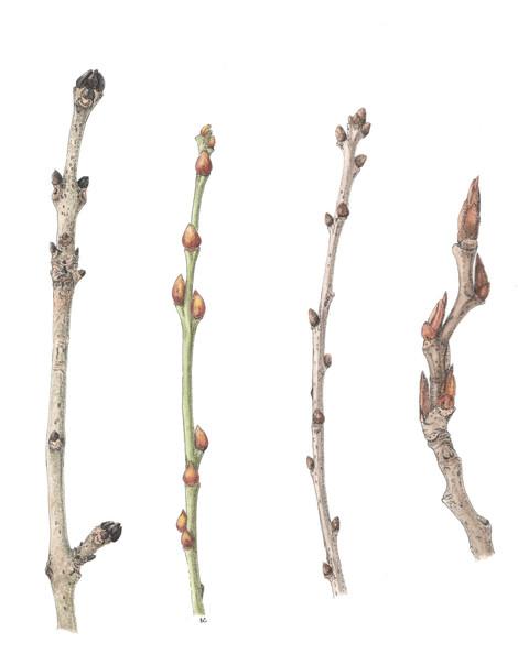 Winter Twigs - © Brenda Coleman - UK