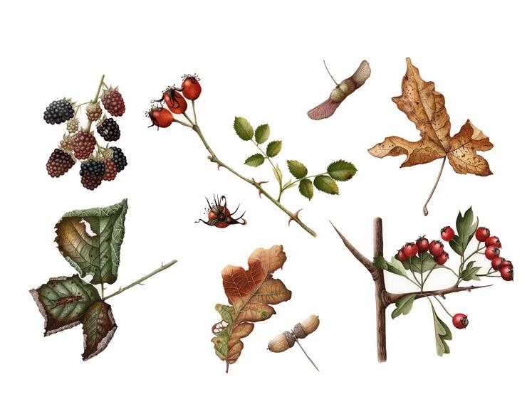 Hedgerow Study © Catherine Hand