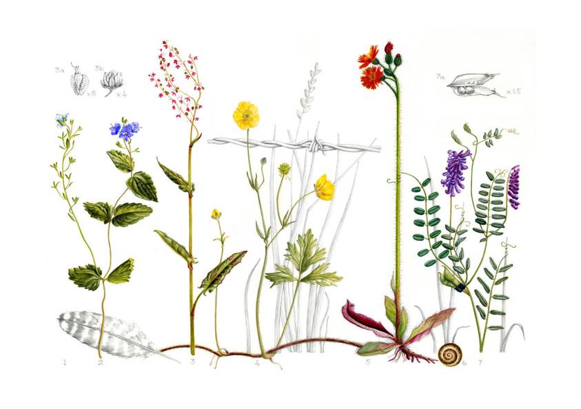 Wildflowers - © Lorraine Barraclough - UK