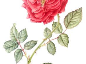Ballet to Botanical Art