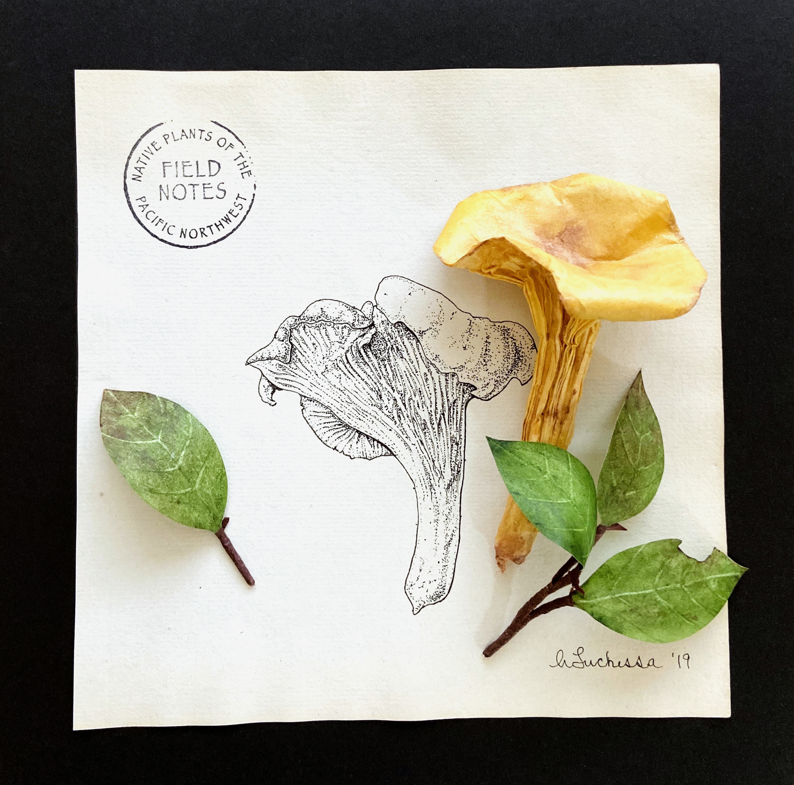Pacific Northwest Chanterelle and Salal_
