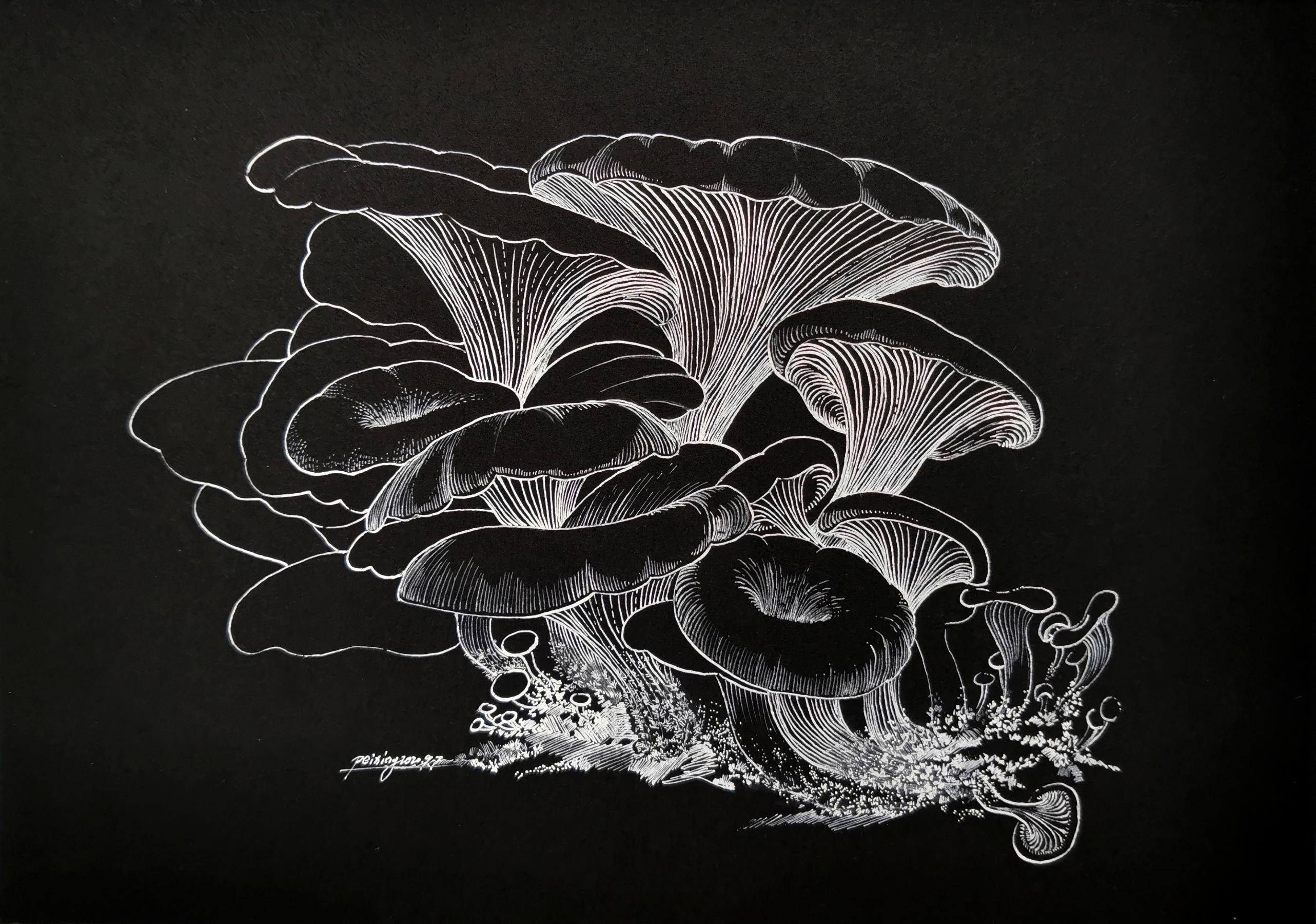 Oyster mushroon