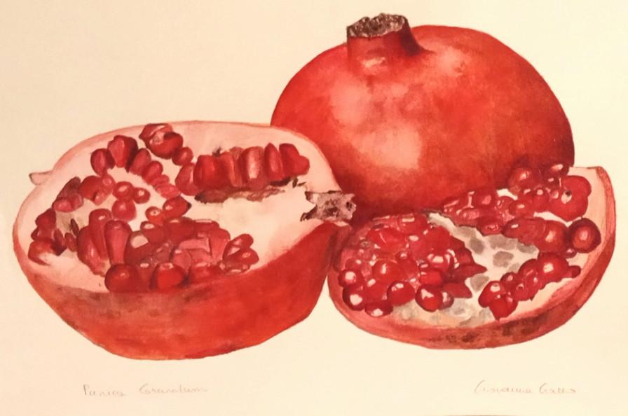 Pommegranate - © Giovanna Gatto - Italy