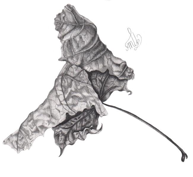 Old Sycamore leaf - © Marie Batters - UK