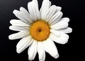 The three B's - Complex Flowers