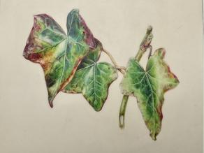 Painting on Vellum Part II