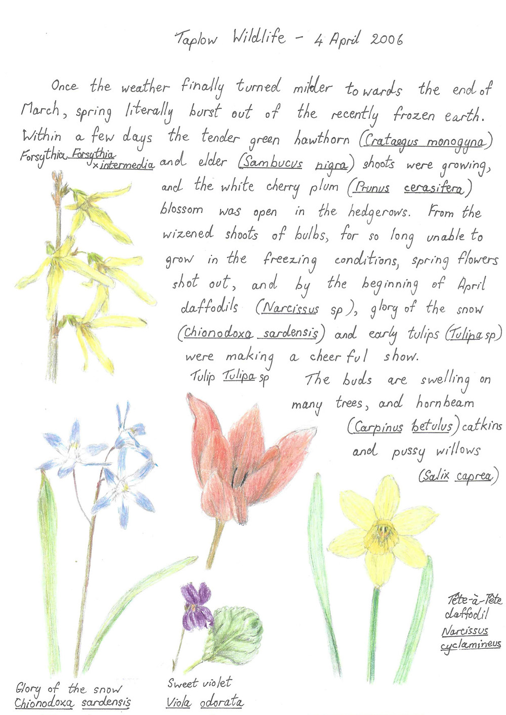Taplow Wildlife - April 2006