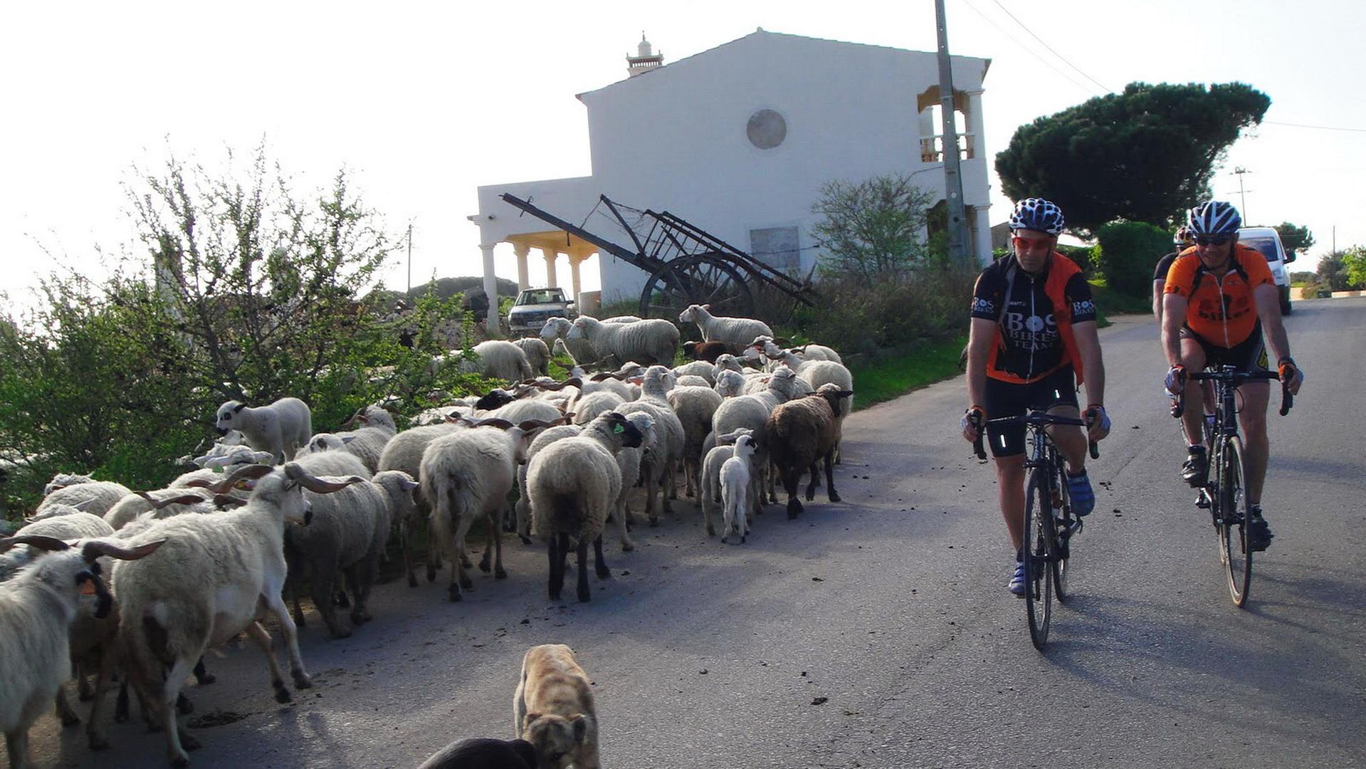 biketoursalgarve_gfny_6.jpg