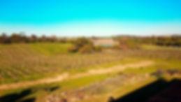 biketoursalgarve_winetour_3.jpg