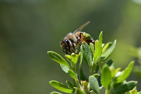 killerbee1.jpg