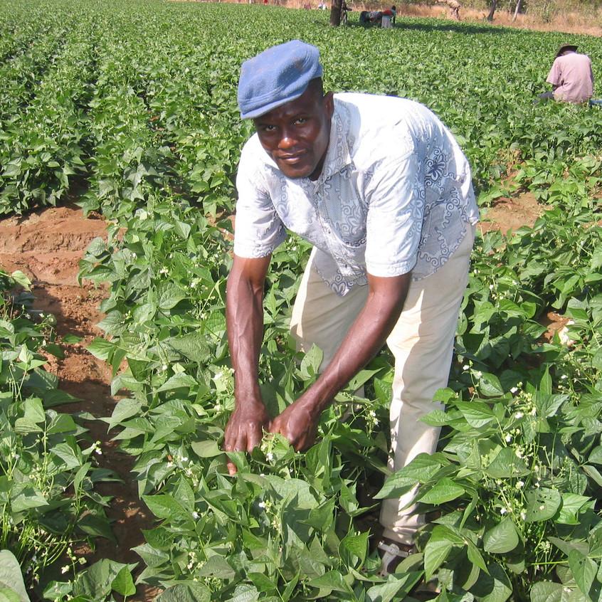 Jordbruksarbete