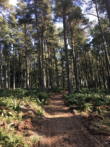 glack forest photo.jpg