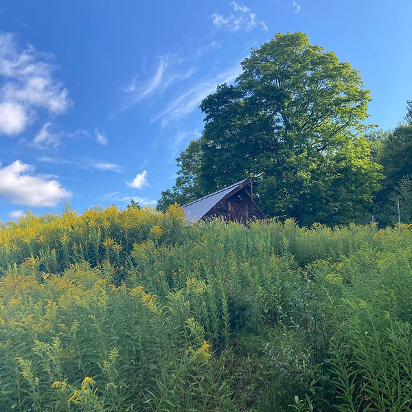 In Situ Polyculture Commons, Summer 2020