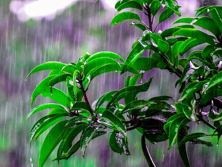 Situación hidrometeorológica en Chile: Especialistas proyectan más lluvias para el invierno