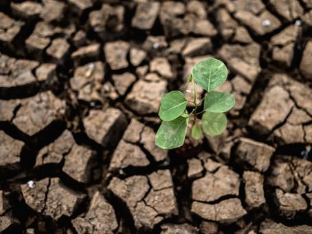 Industria Agroalimentaria: Gobierno prioriza disponibilidad de agua ante el cambio climático