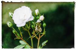 bruidsfotografie_jan_greta-2