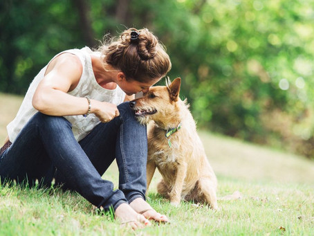 Healing Animals with Energy