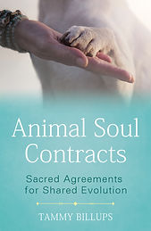 animal soul contracts cover final.jpg