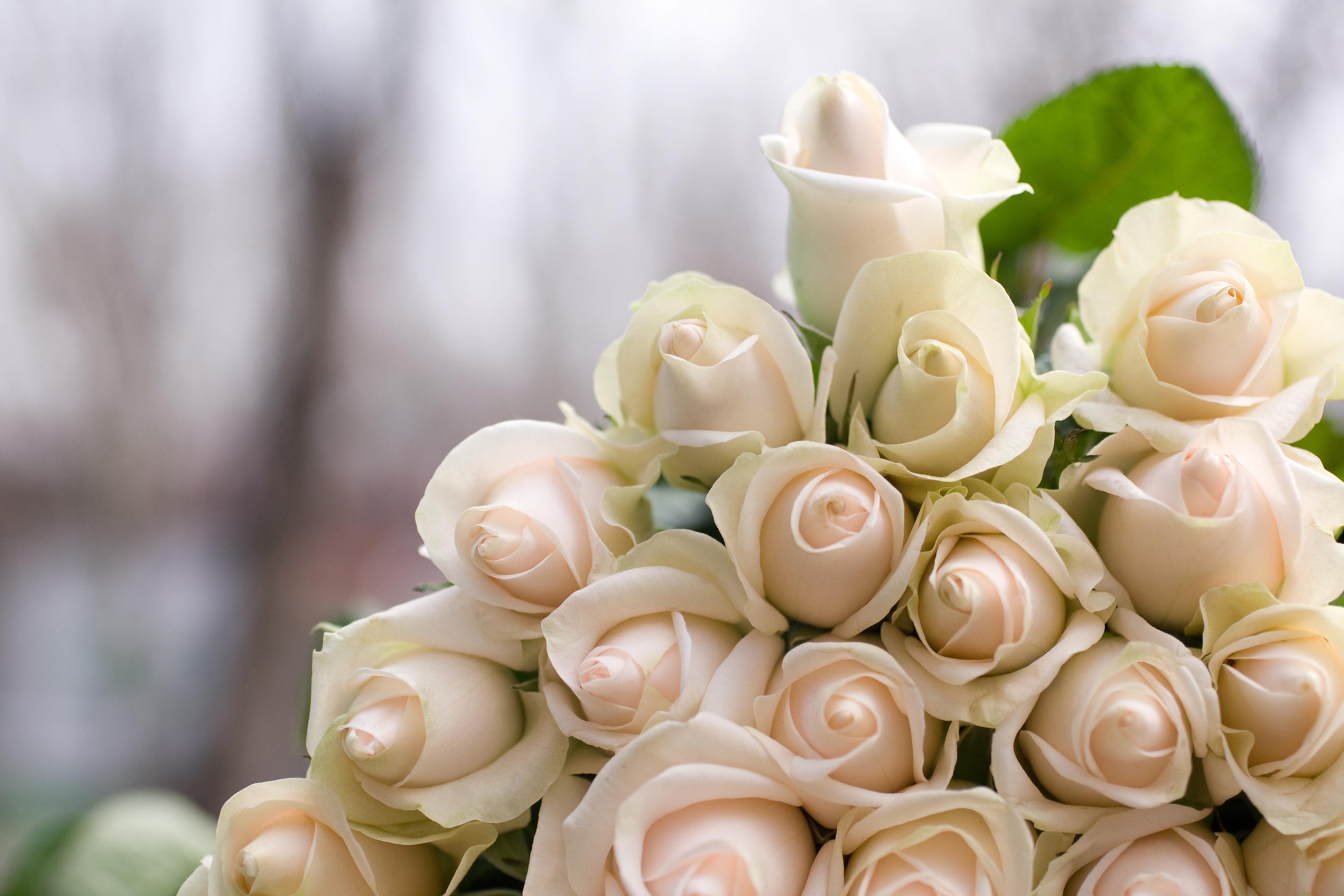 Complimentary Wedding Consultation