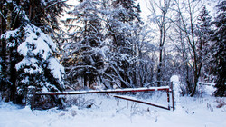 Alaska Snow_8