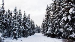 Alaska Snow_3
