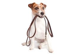 Please leash your pets