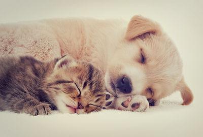 kitten and puppy.jpg