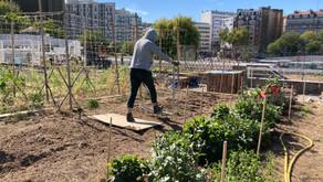 Une Agriculture Urbaineau service de l'agro-écologie