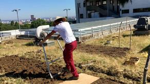 «L'agriculture urbaine n'a pas de modèle économique viable»