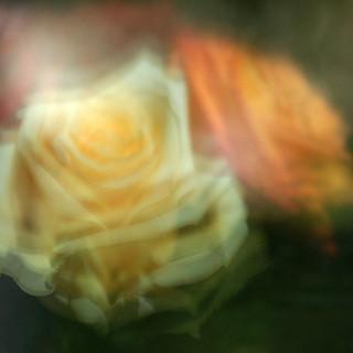 Fotografie Blumen