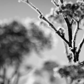 Fotografie Natur schwarzweiss2