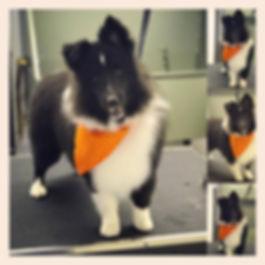 wolfeboro dog grooming, lakes region grooming, wolfeboro pet grooming
