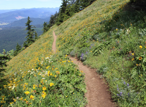 My Top Five Spring Columbia River Gorge Hikes