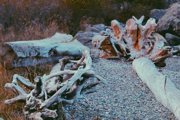 Lopez Island - Watmough