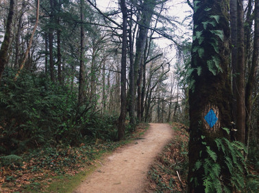 FOREST PARK, PDX