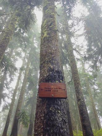 Indian Heaven Wilderness