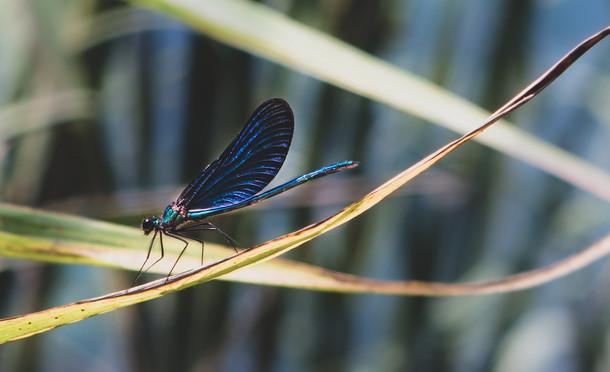 Dragonfly in macro