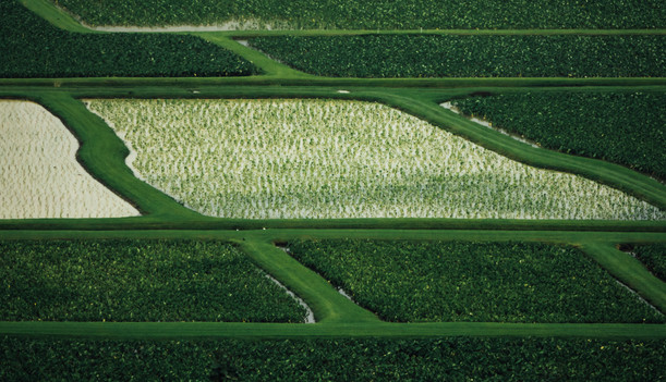 Taro (kalo) fields in Hawaii