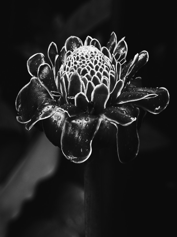 Flora 0.3