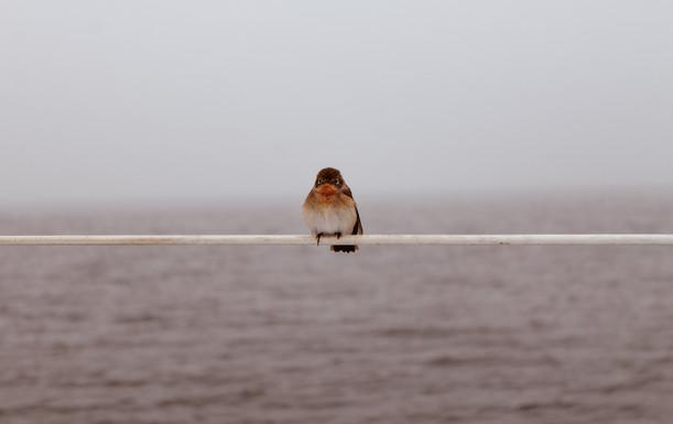 Bird is watching