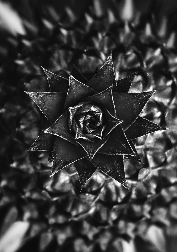 Flora 0.4