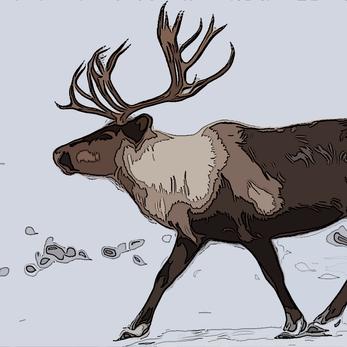 Experiencing the Yukon