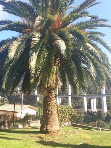 palmera 1.jpg