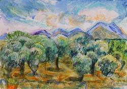 The olive groves of Kapsaliana