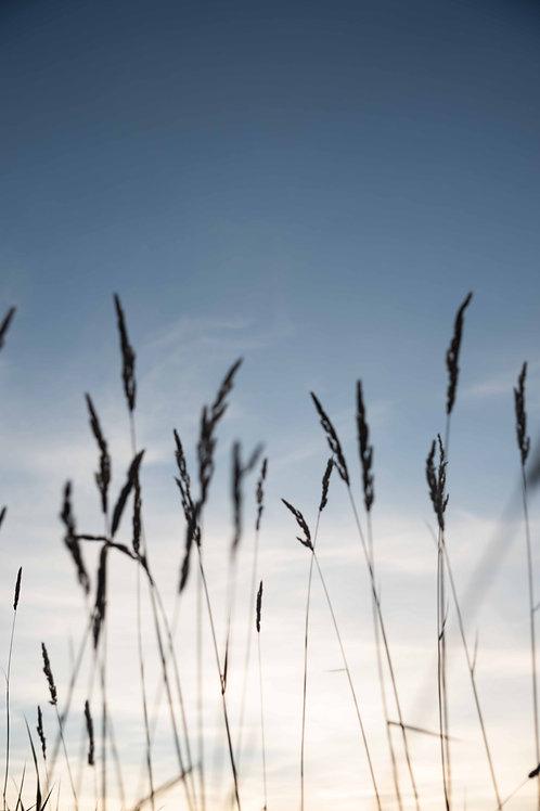 "mountain grass, 4"" x 6"", semi-gloss print"